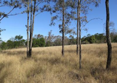 Yellomundee Regional Park Master Plan