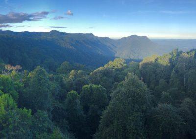 Dorrigo National Park Visitor Precincts